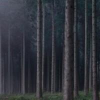 Wald, par Michael Lange